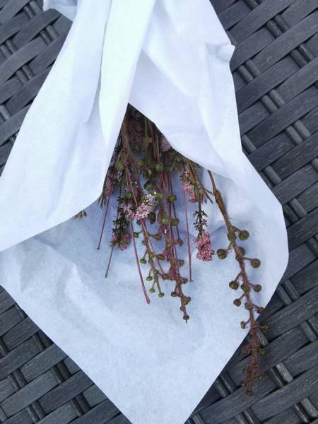 Stilk med blomst lilla nyanser